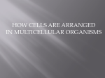 how cells are arranged in multicellular organisms