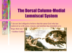The Dorsal Column-Medial Lemniscal System