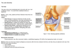 The Lower Extremity The Knee The knee is the most complicated