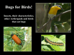 Bugs for Birds! - Tale of Chipilo
