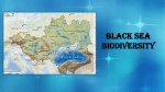 Black sea Biodiversity