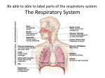 What is the main job of the respiratory system?