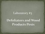 Defoliators and Wood Products Pests