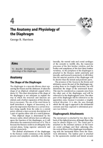 The Anatomy and Physiology of the Diaphragm