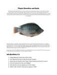 Tilapia Dissection and Guide