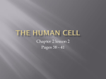 1 class The Human Cell