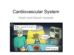 ch_13_the_cardiovascular_systemx