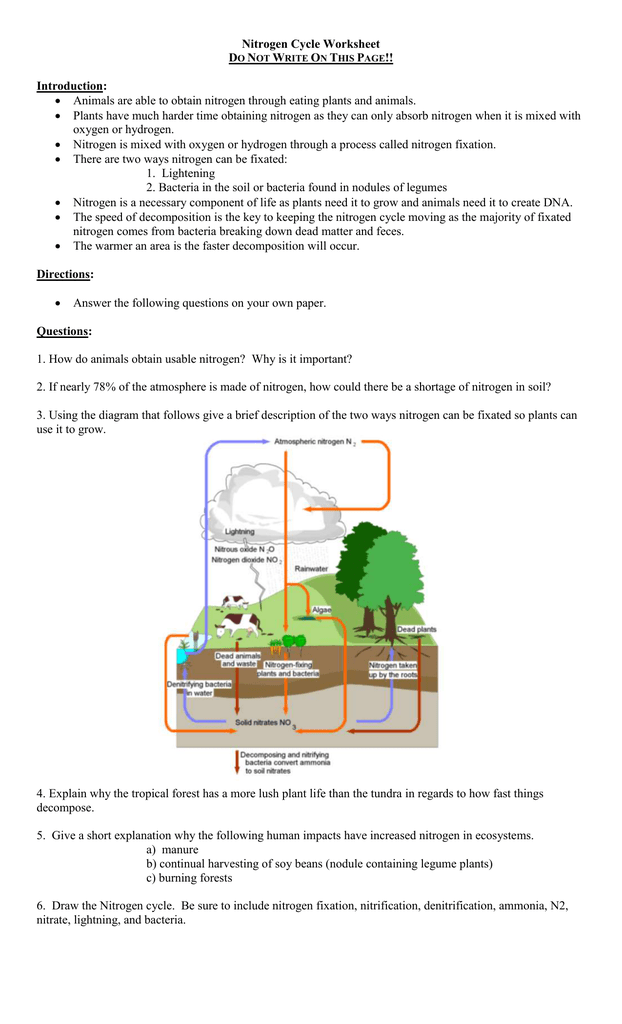 Nitrogen Cycle Worksheet Answers Key   Aflam Neeeak