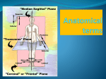 Anatomical terms - Sonoma Valley High School