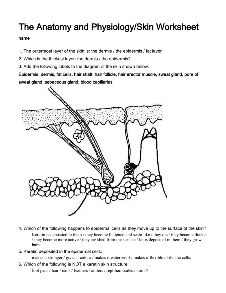 the anatomy and physiology of capillaries