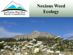 Noxious Weed Management and Native Plant Ecology