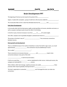 PPT Guide Brain Development