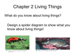 CHAPTER 1 LIVING THINGS