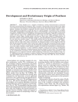 Development and Evolutionary Origin of Feathers