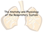 Respiratory System PPT - Effingham County Schools