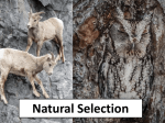 Natural Selection - RMC Science Home