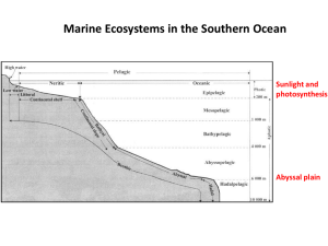 Lecture VII: Marine ecosystems