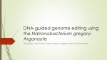 DNA-guided genome editing using the