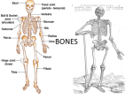 bones - Miss Gleason`s Science