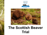 Introduction - Scottish Beaver Trial