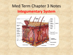 Med Term Chapter 3 Notes