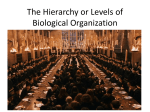 The Hierarchy of Biological Organization