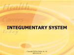 Integumentary System Powerpoint