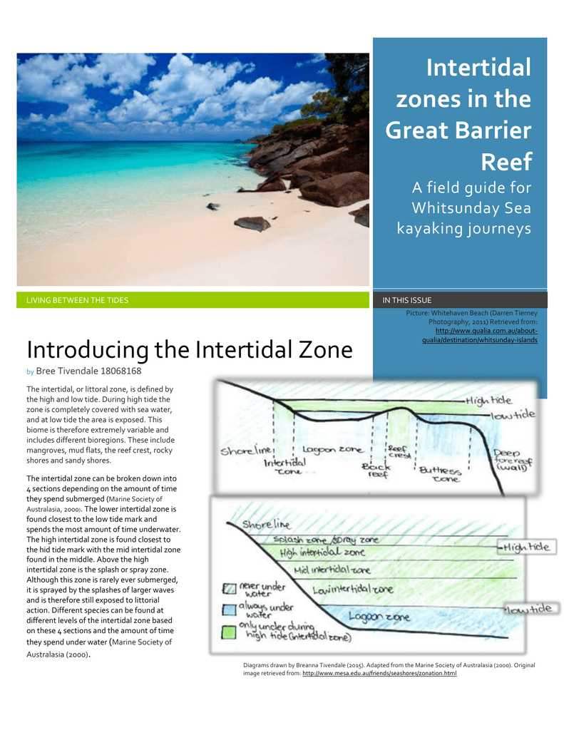intertidal zone field guide