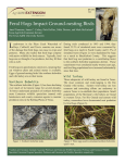 Feral Hogs Impact Ground-nesting Birds