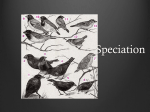 Speciation - WordPress.com
