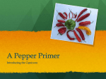 A Pepper Primer - Seed Biotechnology Center