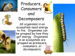 Producers, Consumers and Decomposers