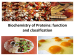 02_Classification and functions of simple and complex proteins