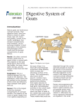 Digestive System of Goats - Alabama Cooperative Extension System
