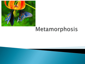 Metamorphosis - Science with Ms. Ras