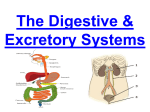 Think, Pair, Share Digestive System