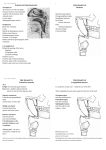 PARTS OF THE PHARYNX THE PHARYNX Skeleton THE