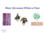 Water Movement Within a Plant - mvhs