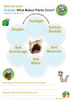 Sunlight Soil Minerals Soil Water Soil Anchorage Oxygen Carbon