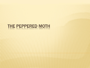 The Peppered Moth - Mr Andrews` Science Space!
