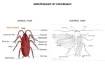 anatomy-of-cockroach