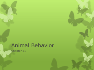 6AnimalBehavior