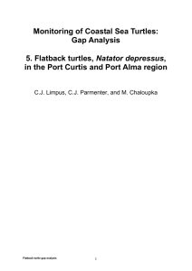 Monitoring of Coastal Sea Turtles: Gap Analysis 5. Flatback turtles