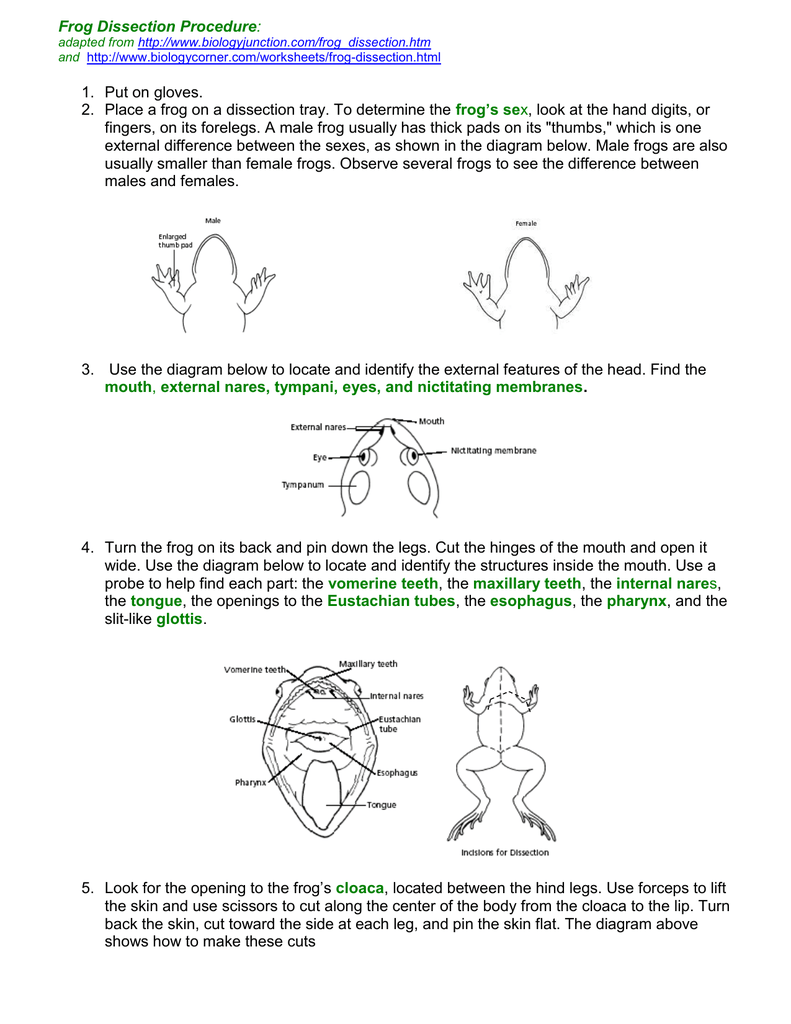 Frog Dissection Procedure: adapted from http://www.biologyjunction