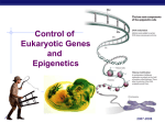 Gene Regulation in Eukaryotes - Bremen High School District 228