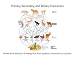Arrows show direction of energy flow from organism consumed to