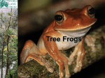Tree Frogs - World Land Trust