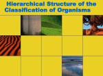 Hierarchical Structure of the Classification of Organisms