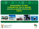 Non consumptive use of marine species