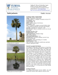 Cabbage Palm - Lee County Extension